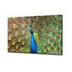 Ready2hangart 'Peacock' by Bruce Brain Photographic Print