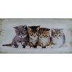 PD Global 4 Kittens Wall Art