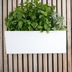 Mini Self-Watering Plastic Wall Planter - Glowpear Planters