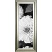 Classy Art Wholesalers White Bloom 1 by Susan Bryant Framed Photographic Print