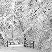 Prestige Art Studios Winter Wonderland Photographic Print