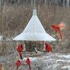 Mandarin Tube Bird Feeder - Arundale Bird Feeders