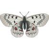 Wallhogs Butterfly IV Cutout Wall Decal
