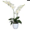 Mica Decorations Tusca Phalaenopsis in Pot