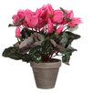 Mica Decorations Stan Cyclamen in Pot