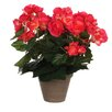 Mica Decorations Stan Begonia in Pot