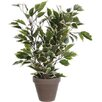 Mica Decorations Ficus Natasja Variegated Plant in Pot