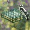 Suet Bird Feeder - Droll Yankees Bird Feeders