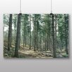 Big Box Art 'Conifer Tree Forest' Photographic Print