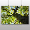 Big Box Art Poster Maple Tree Leaves, Fotodruck