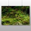 Big Box Art Poster Moss on Forest Floor, Fotodruck