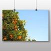 Big Box Art 'Orange Tree' Photographic Print
