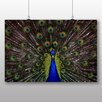 Big Box Art Peacock Photographic Print