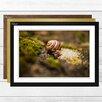 Big Box Art 'Snail 1' Framed Photographic Print
