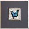 ERGO-PAUL Gerahmter Kunstdruck Blauer Schmetterling II - 40 x 40 cm