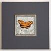 ERGO-PAUL Gerahmter Kunstdruck Orangener Schmetterling I - 40 x 40 cm