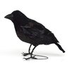 Shea's Wildflowers Harold the Halloween Crow Figurine