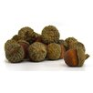 Shea's Wildflowers Decorative Bag of Acorn (Set of 18)