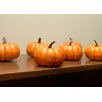 Northlight Seasonal Fall Harvest Artificial Pumpkin Thanksgiving Decoration (Set of 6)