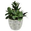 Northlight Seasonal Artificial Mixed Succulent Desk Top Plant in Pot