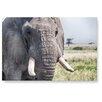 LanaKK Wandbild Elefant, Fotodruck