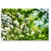 LanaKK Wandbild Apfelblüte, Fotodruck