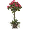 Darby Home Co Bougainvillea Beauty Square Topiary in Basket