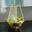 Tookes Glass Terrarium - Brayden Studio Planters