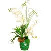 LCG Florals Orchid Arrangement with Cypress Grass and a Horn Plant in an Embossed Vase