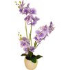 LCG Florals Phalaenopsis Orchid and 3 Embossed