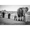 GettyImagesGallery Female African Elephant, Fotodruck von Cedric Favero