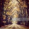 GettyImagesGallery View of Empty Country Road Along Trees, Fotodruck von Steven Swinnen and EyeEm