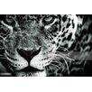 """GettyImagesGallery """"Leopard (Panthera Pardus)"""" von Zac Macaulay, Fotodruck"""