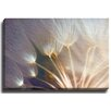 Bashian Home Ethereal Flower by Terri Ellis Photographic Print on Wrapped Canvas