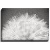 Bashian Home Minimalist Dandelion BW by Lisa Russo Photographic Print on Gallery Wrapped Canvas