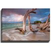 Bashian Home Driftwood Sunset by Katherine Gendreau Photographic Print on Gallery Wrapped Canvas