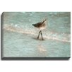 Bashian Home Beach Bird by Terri Ellis Photographic Print on Wrapped Canvas
