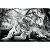 NEXT! BY REINDERS Deco Panel Tiger guckt dich an - 60 x 90 cm