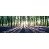 NEXT! BY REINDERS Wald Hasenglöckchen Photographic Print