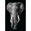 NEXT! BY REINDERS Deco Panel König der Natur Elefante, Fotodruck