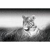 NEXT! BY REINDERS Deco Panel Könige von Natur Tiger, Fotodruck