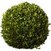 One Allium Way Preserved Boxwoods Ball Topiary