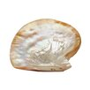 Beachcrest Home Pearl Shell Plate