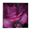 House of Hampton Read Between the Petals Photographic Print on Wrapped Canvas