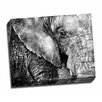 Picture it on Canvas 'Sumatran Elephant' Graphic Art Wrapped Canvas