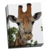 Picture it on Canvas 'Giraffe Portrait III' Photographic Print on Wrapped Canvas