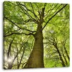 Pixxprint Colossal Tree in Jungle Photographic Print on Canvas