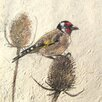 AnnabelLangrish Goldfinch by Annabel Langrish Graphic Art