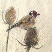 AnnabelLangrish Goldfinch by Annabel Langrish Graphic Art