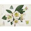 Magnolia Box Gerahmter Kunstdruck Rhododendron Rhabdutum von Lillian Snelling